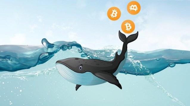 Balina (Whale) Nedir?
